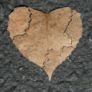 heart-742712-1920.jpg