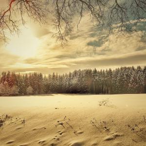 winter-2765831-1920.jpg