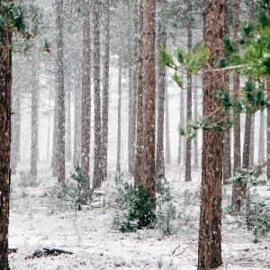 woods-690257-1920.jpg